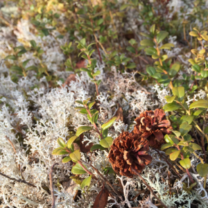 Förvaring av vilt, bär och svamp